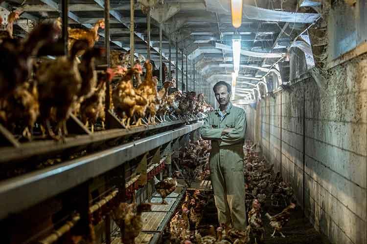 Kippenboer in kippen ren; foto gemaakt door Feike Faase